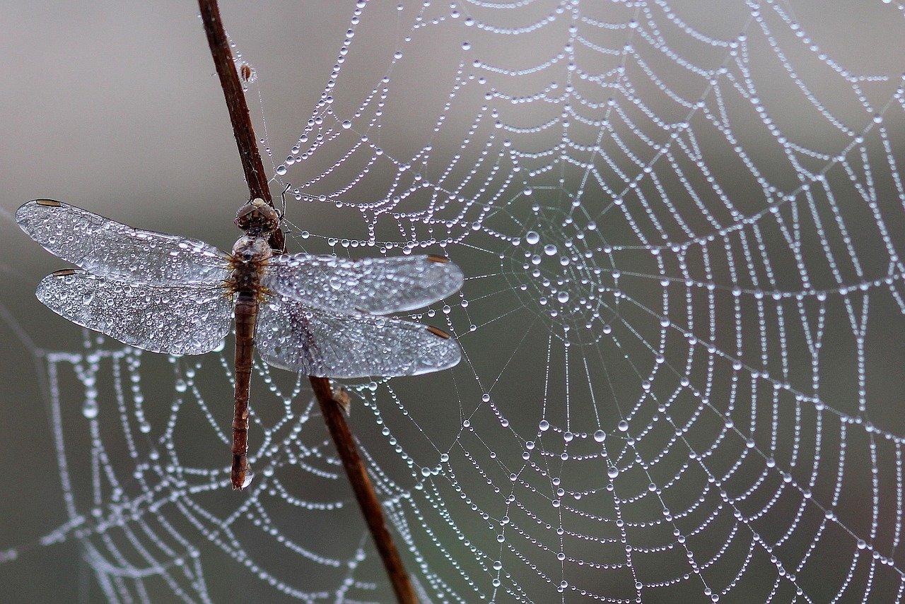 Web-Traffic erholt sich nach COVID-19-Einschränkungen